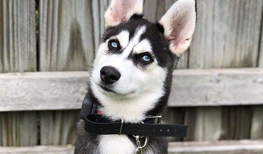 Puppy Consult