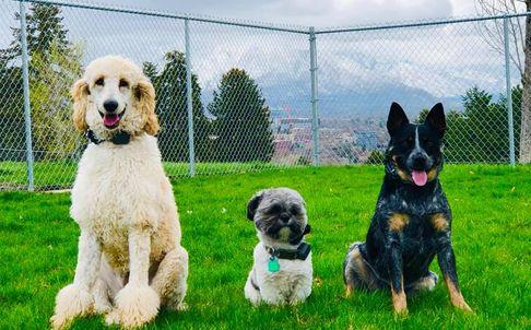 Detroit Dog Training